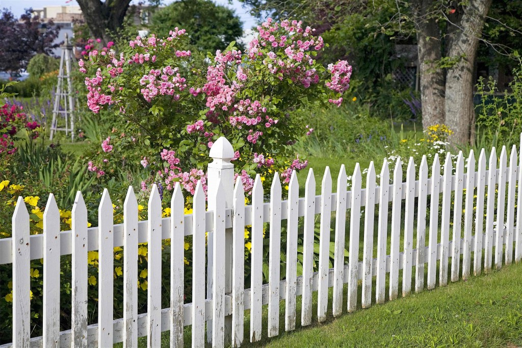 Replace fences & gates